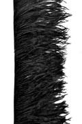 Ostrich Fringe 15-17cm