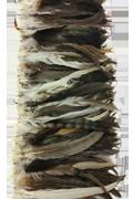 Coque Tails Chinchilla