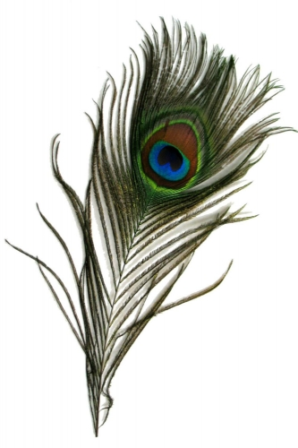 Pfauenauge 25-30cm, natur, 100er Pack
