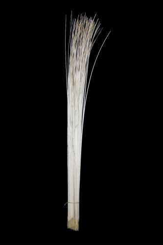 Pfauenkiel gestrippt 110cm lang 100er Bund