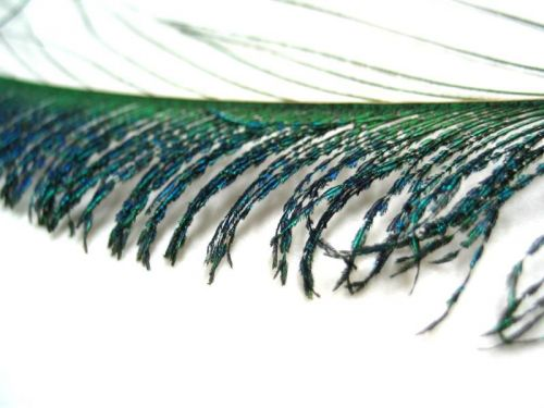 Peacock Sword 35cm, PACK of 10