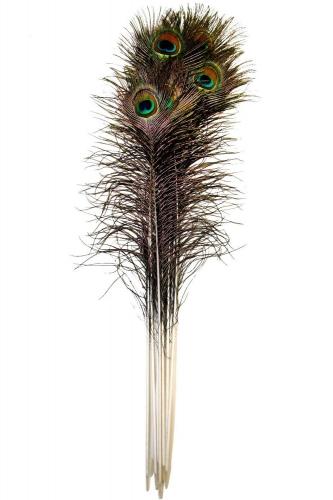 Pfauenfeder 90-100cm, natur, 10er Pack