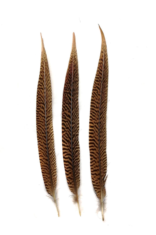 Goldfasanfedern 1. Wahl, 30-35cm, 10er Pack