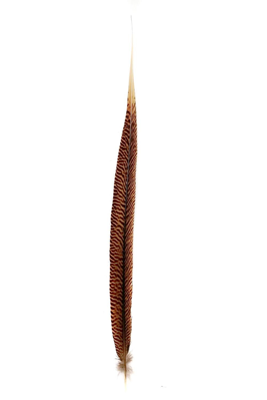 Goldfasanfedern 1. Wahl, 40-45cm