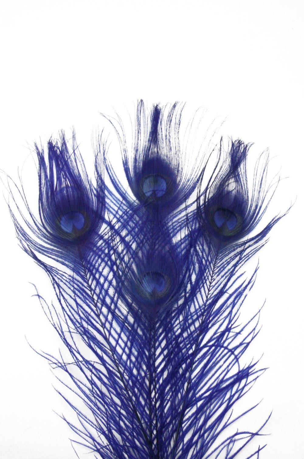Pfauenauge 25-30cm, blau, 10er Pack