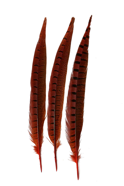Wildfasanfedern 1.Wahl 30-35cm orange 10er PACK