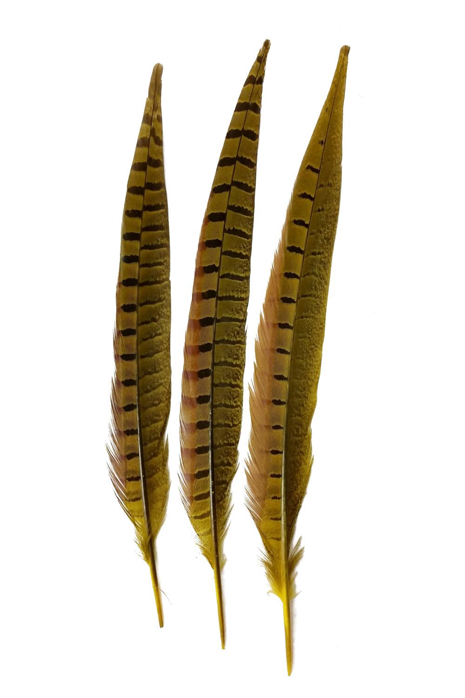 Wildfasanfedern 1.Wahl 30-35cm gelb 10er PACK