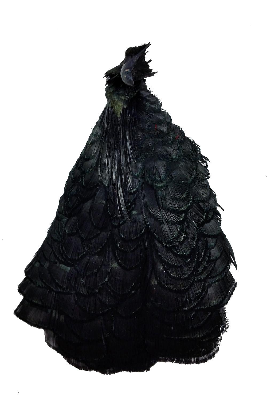 Lady-Amherstfasan Tolle schwarz