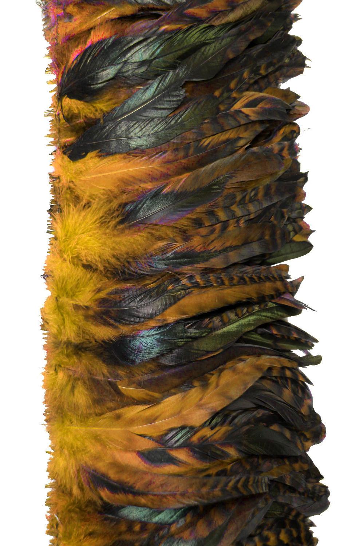 Hahnenschlappen Chinchilla 10-15cm orange