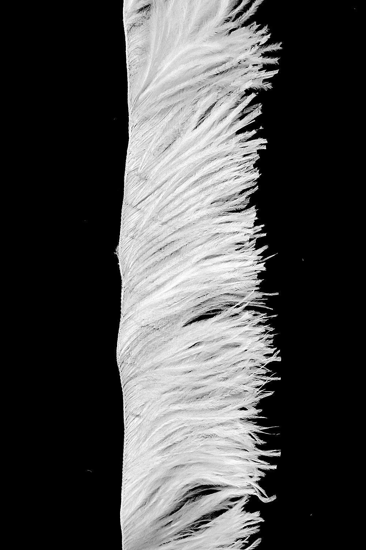 Straußenfranse 2-fach sehr kurz, weiß
