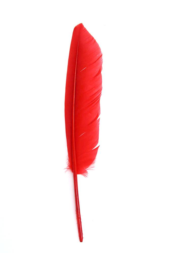 Gänsefeder 22-27cm, rot, rechts, 10er Pack