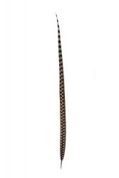 Königsfasanfedern 1. Wahl, 90-100cm