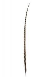 Königsfasanfedern 1. Wahl, 120-130cm