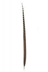 Königsfasanfedern 1.Wahl, 100-110cm