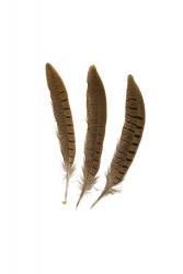 Wildfasanfedern 1.Wahl, 15-20cm, 10er PACK