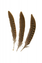 Wildfasanfedern 1.Wahl, 20-25cm, 10er PACK