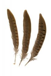 Wildfasanfedern 1.Wahl, 25-30cm, 10er PACK
