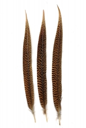 Goldfasanfedern 1. Wahl, 35-40cm