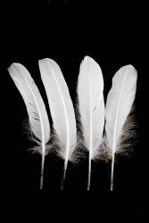 Goose Pointer 17-22cm white 10g Pack