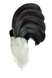 Blackcock Plumes 5ply right