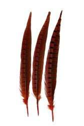 Wildfasanfedern 1.Wahl 30-35cm orange 10er PACK