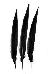 Wildfasanfedern 1.Wahl 30-35cm schwarz 10er PACK