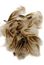 Mallard Duck Female Plumage 5g PACK