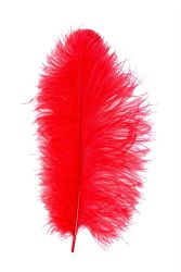 Ostrich Wing carneval Q. 40/50cm red