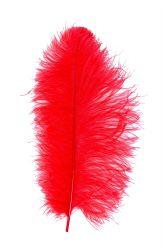 Straußenfeder Karneval 40/50cm rot