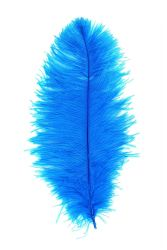 Ostrich Wing carneval Q. 50/60cm turquoise