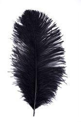 Straußenfeder Karneval 50/60cm schwarz