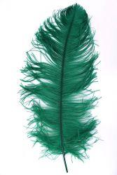 Straußenfeder Karneval 60/70cm grün