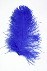 Ostrich Wing middle Q. 40/50cm blue
