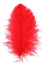 Ostrich Wing middle Q. 50/60cm red