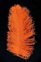 Straußenfeder Mittel 50/60cm orange