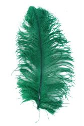 Ostrich Wing middle Q. 50/60cm green