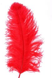 Ostrich Wing middle Q. 60/70cm red
