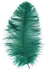 Ostrich Wing middle Q. 60/70cm green