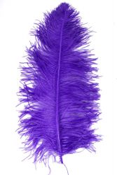 Ostrich Wing middle Q. 60/70cm purple