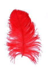 Ostrich Wing selected Q. 40/50cm red