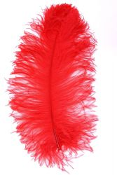 Ostrich Wing selected Q. 50/60cm red