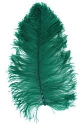 Ostrich Wing selected Q. 50/60cm green