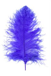 Ostrich Wing selected Q. 50/60cm purple