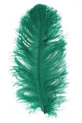 Straußenfeder Ausgesucht 60/70cm grün