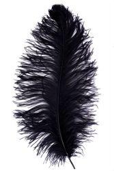Straußenfeder Ausgesucht 60/70cm schwarz