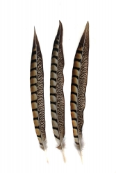 Lady-Amherst Fasan 1. Wahl, 25-30cm, 10er PACK