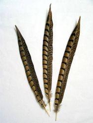Lady-Amherst Fasan 1. Wahl, 40-50cm
