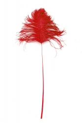Ostrich Tips 40-50cm red