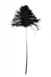 Straußenblinker schwarz 50cm