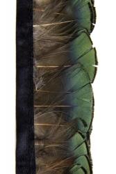 Goldfasanfederborte Grünspiegel 50cm